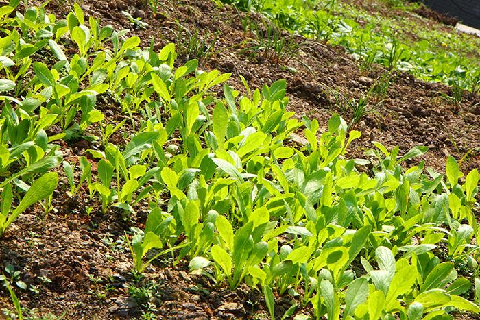 养老院自种绿色蔬菜