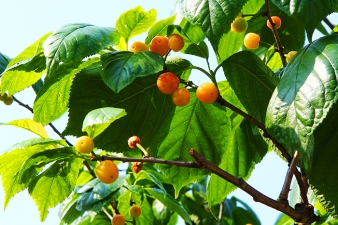 养老院绿色水果